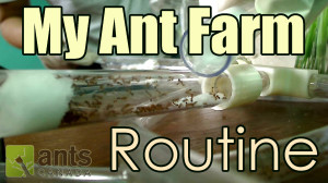 New Video: My Ant Farm Routine (Time Lapse)