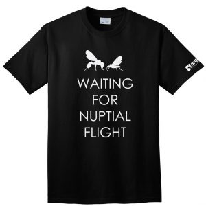 Waiting For Nuptial Flight front