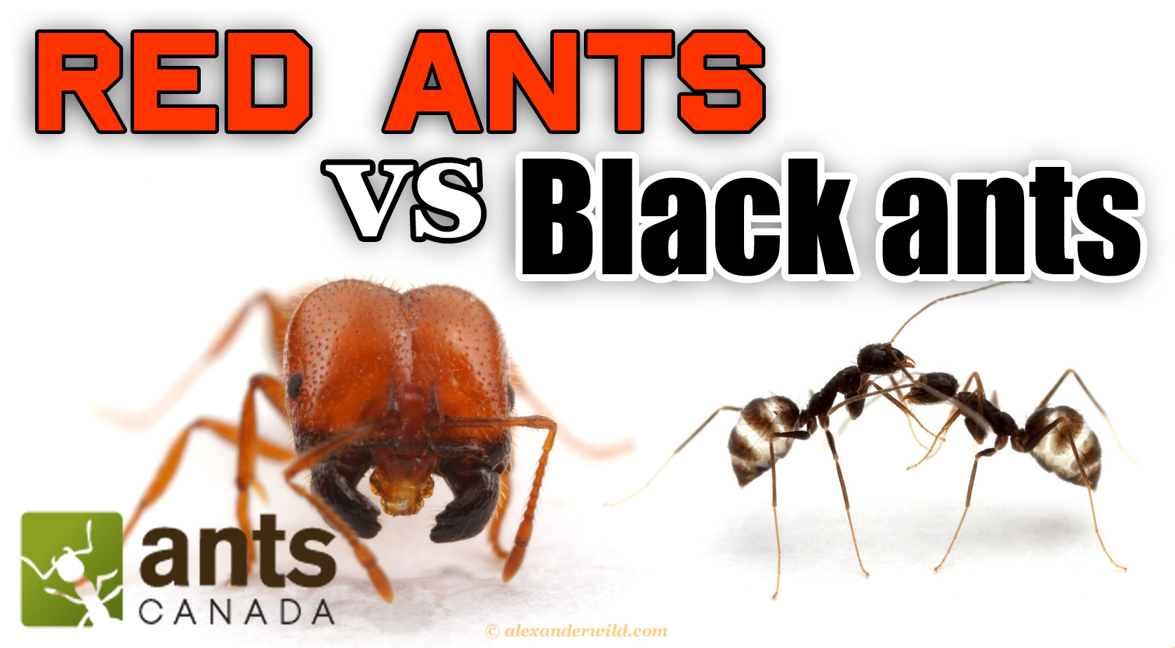 Frequently Asked Questions About Ants | Terminix