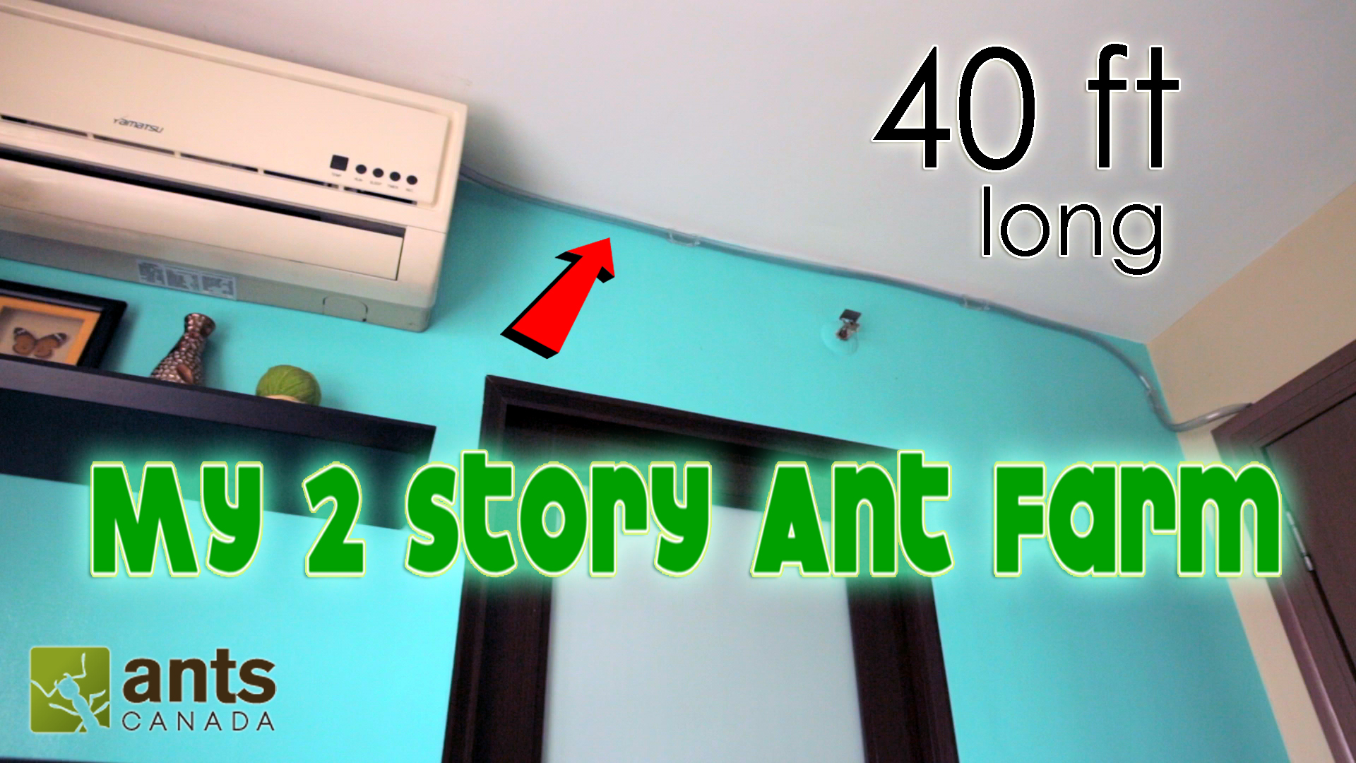 NEW VIDEO: I Made a 2-Story Ant Farm
